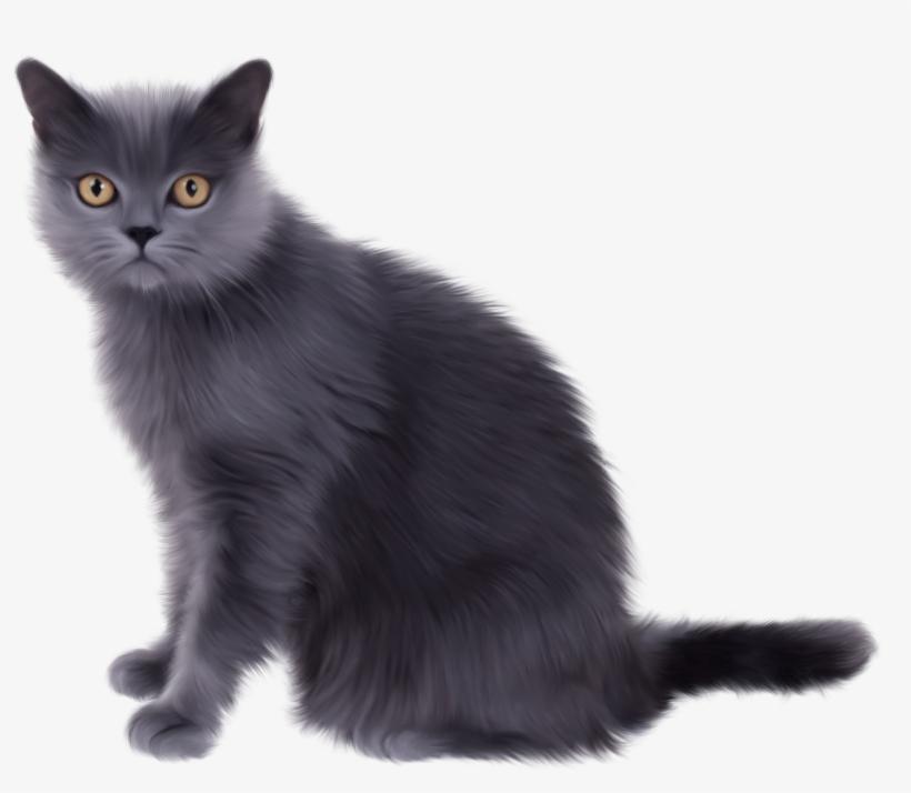 Persian Cat Clipart Transparent White.