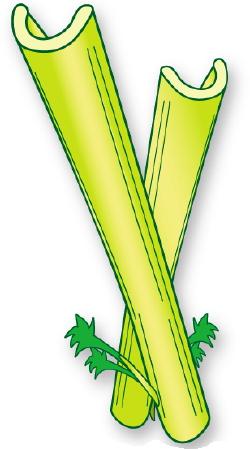 Similiar Animated Celery Keywords.