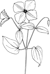 Clematis Clip Art at Clker.com.