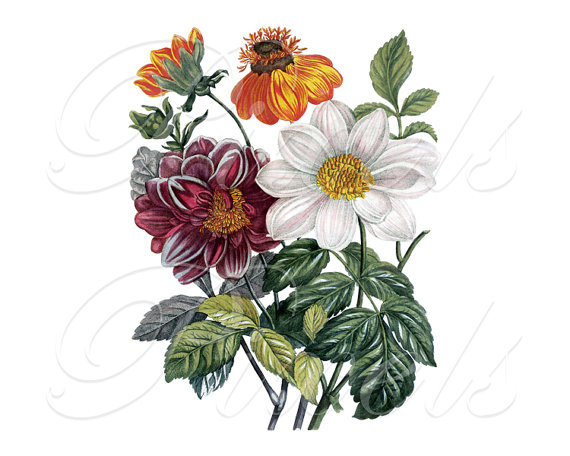 CLEMATIS Bouquet, Instant Download, Floral Wedding Clipart.