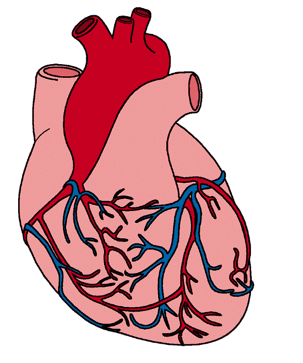 Hearts Real Heart Clipart.