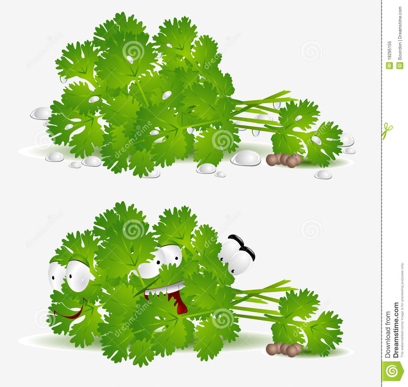 Coriander Stock Illustrations.