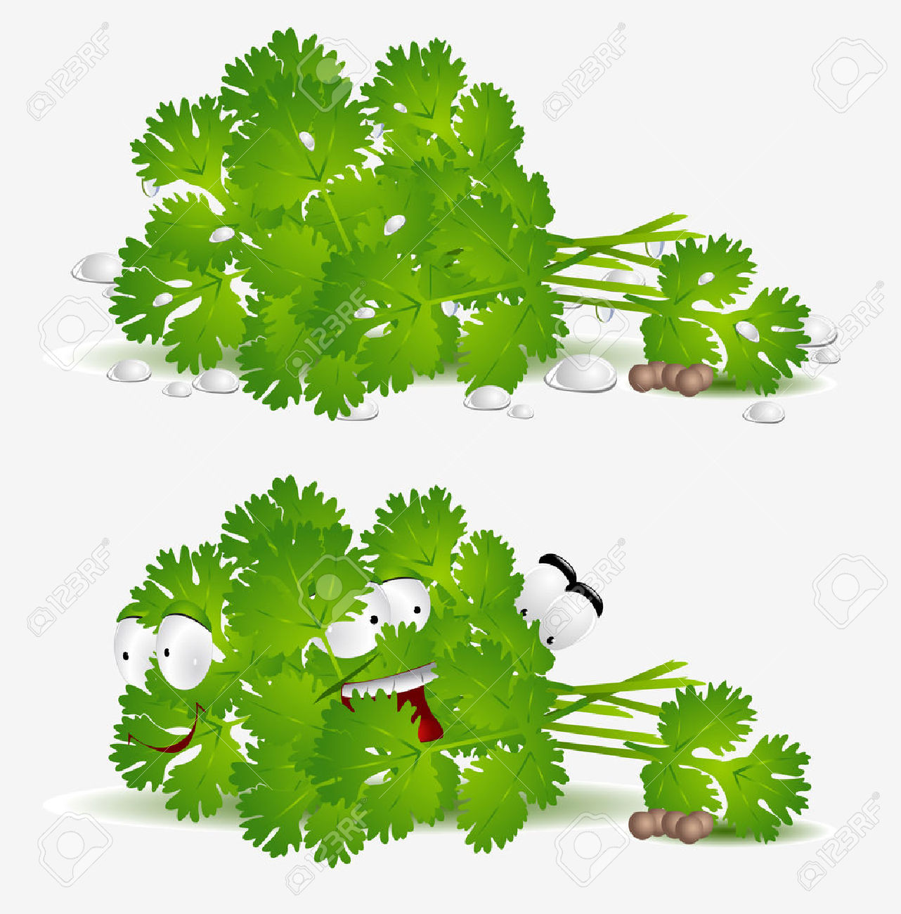 Fresh Coriander Character On White Background Royalty Free.