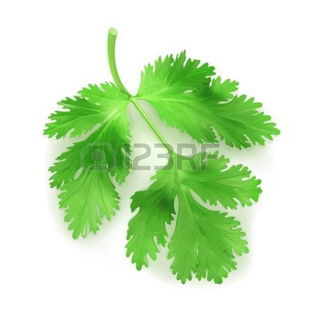 659 Coriander Leaves Stock Vector Illustration And Royalty Free.
