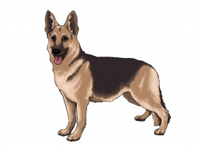 Real Dog Clipart.