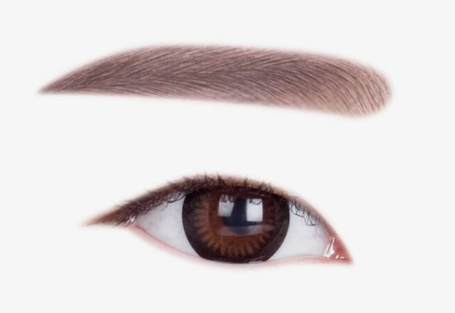 Character eyebrow eyebrows PNG clipart.