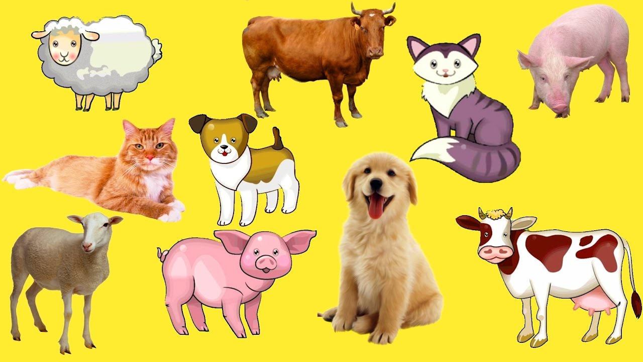 Learn names and sounds farm animals.