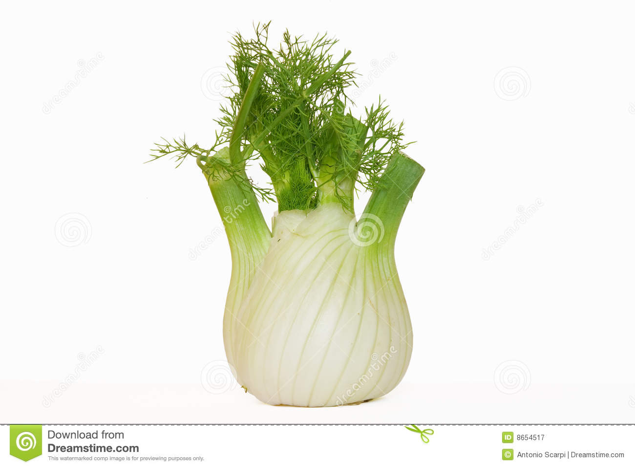 Fennel Royalty Free Stock Photography.