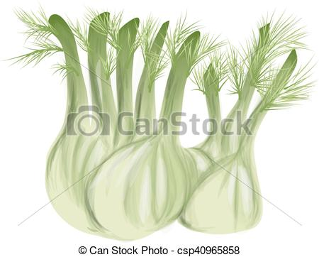 Clipart Vector of fennel with leaves isolated on white background.