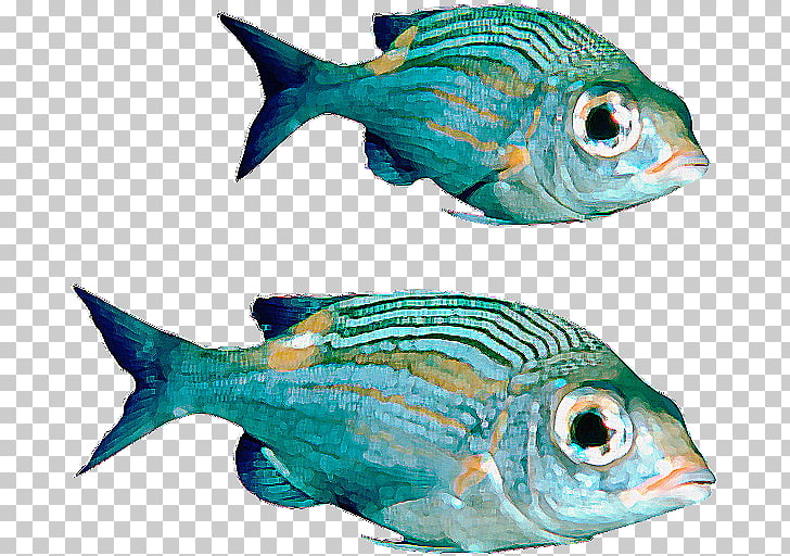 Fish , Real Fish File PNG clipart.