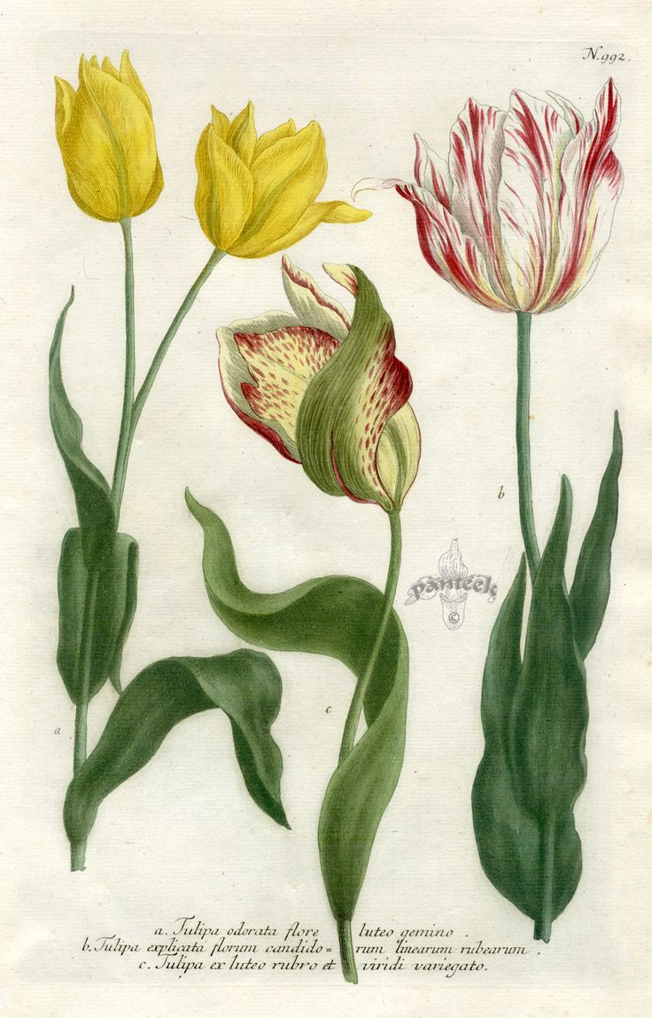 1000+ images about Flora on Pinterest.
