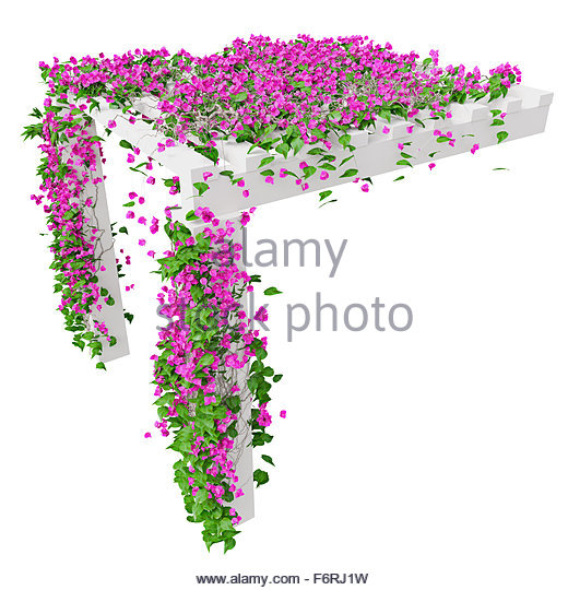 Pink Ivy Cut Out Stock Images & Pictures.