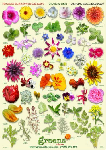 42 flowers you can eat.