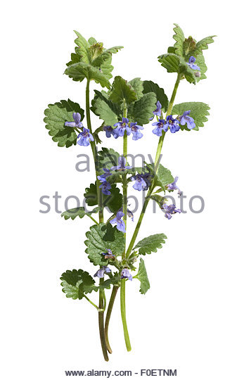 Weeds Garden Cut Out Stock Images & Pictures.