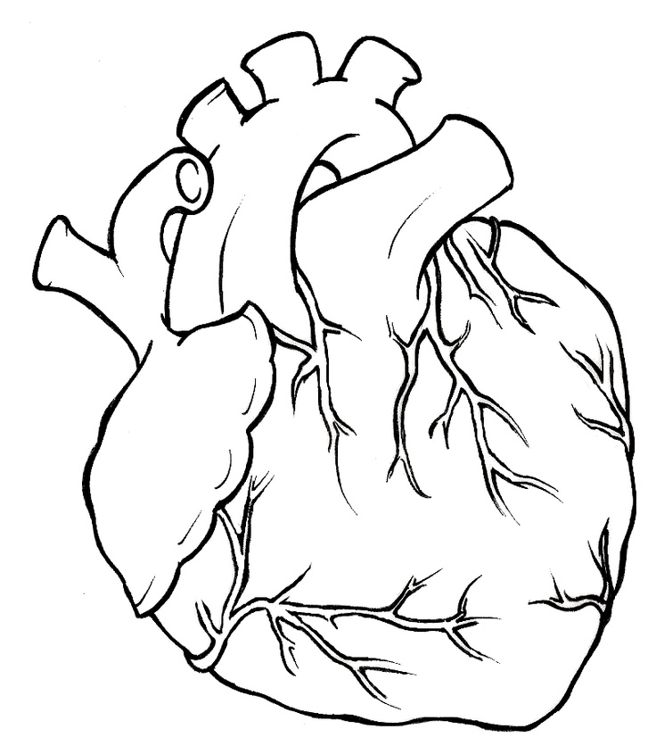 Real heart hearts on clipart library human heart tattoo and.