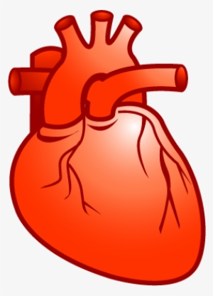 Real Heart PNG, Transparent Real Heart PNG Image Free.