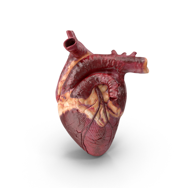 Human Heart PNG Images & PSDs for Download.