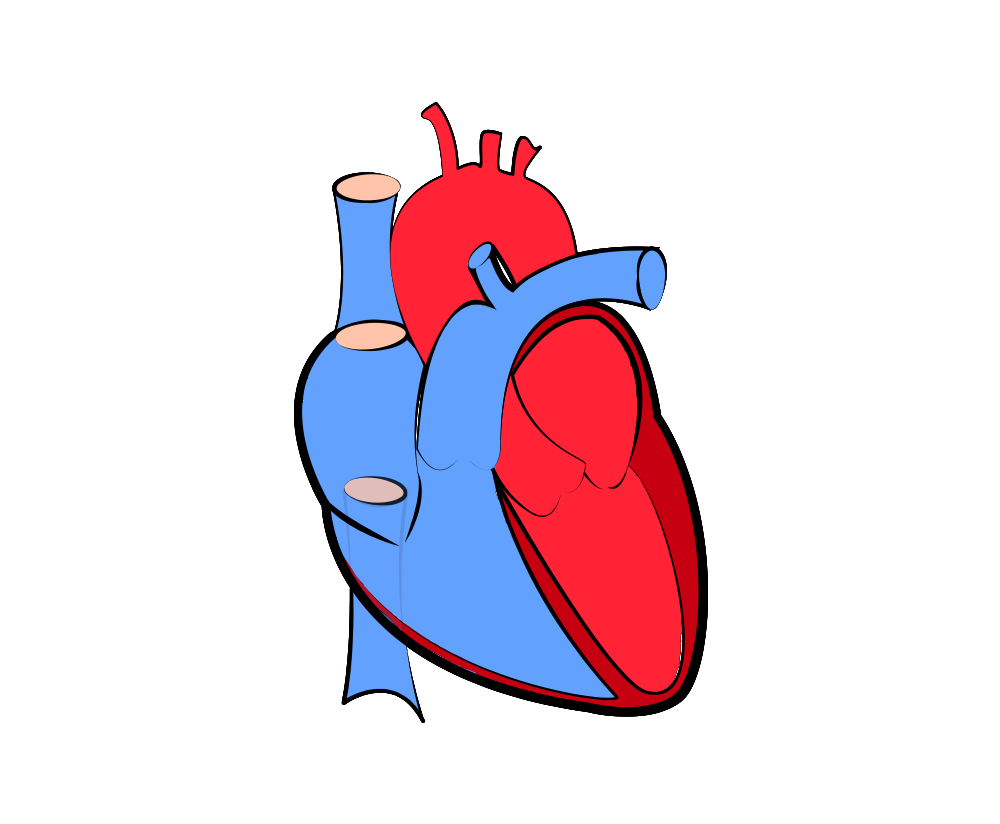 real heart png vector transparent without background image.