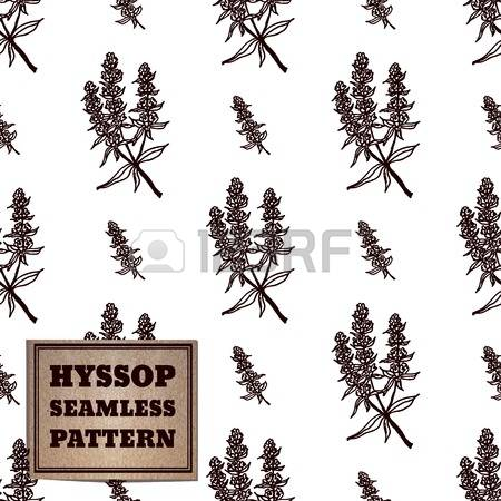 70 Hyssop Cliparts, Stock Vector And Royalty Free Hyssop Illustrations.
