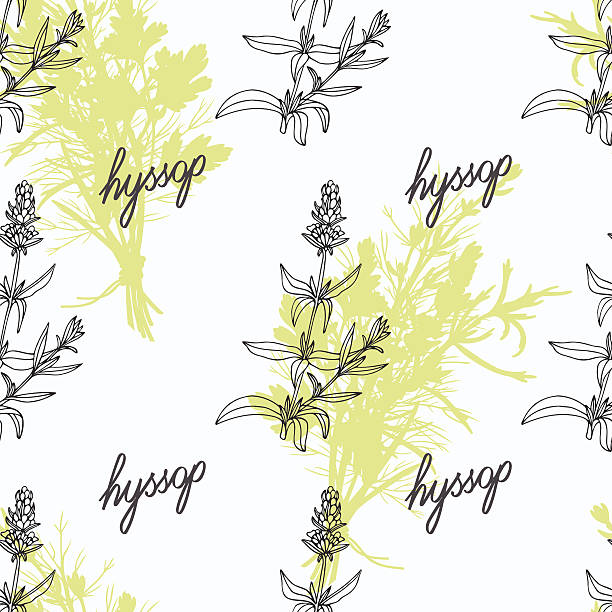 Hyssop Plant Clip Art, Vector Images & Illustrations.