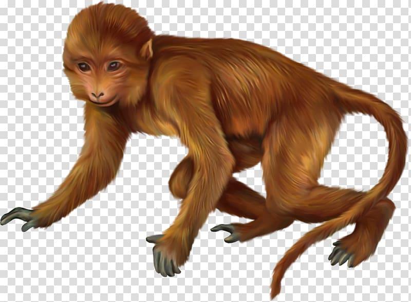 Primate Monkey Animal, monkey transparent background PNG.