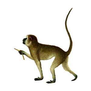 Old Monkey Clipart.
