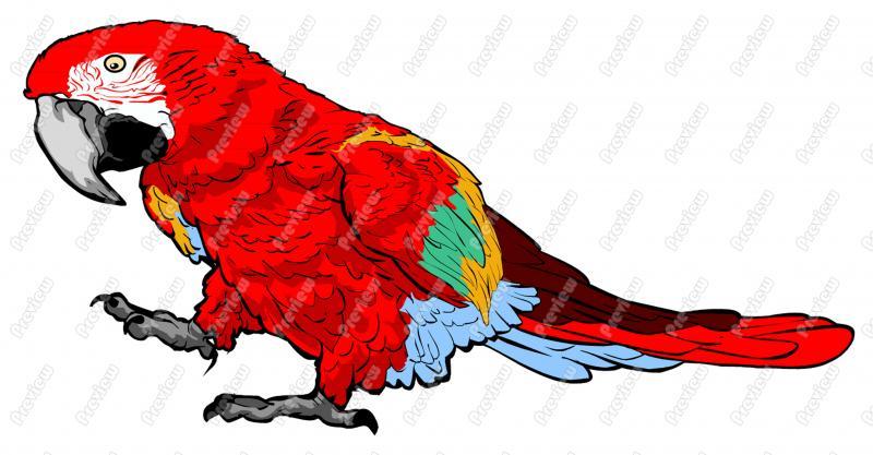 Best Parrot Clipart #16716.