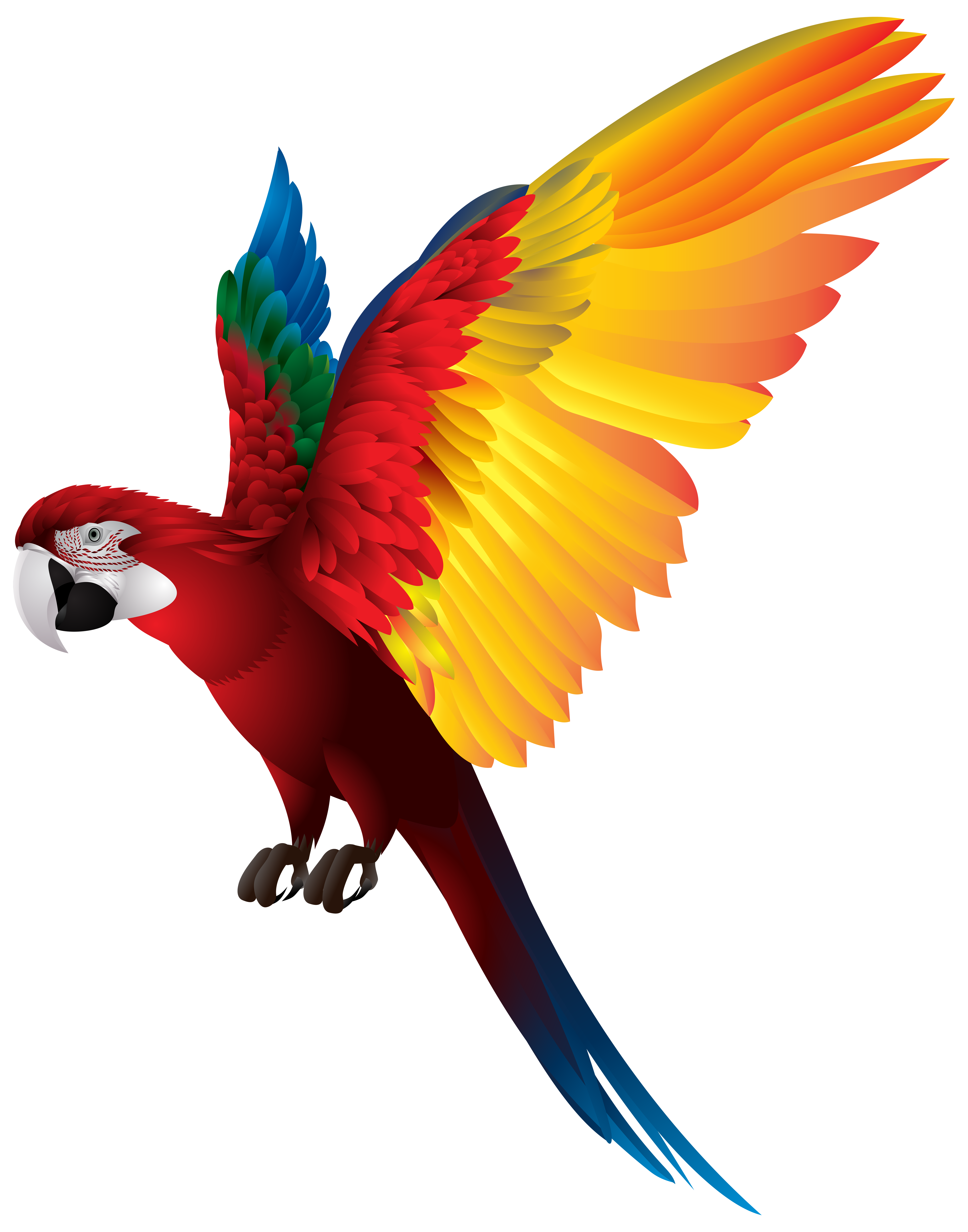 Parrot PNG Transparent Clip Art Image.