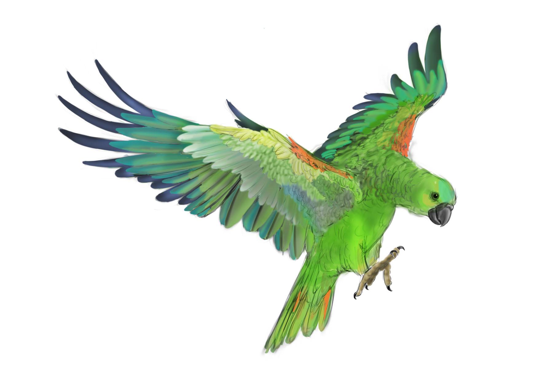 Green parrot clipart.