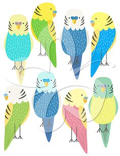 Budgie Care: Does Your Budgie Have Overgrown Nails?.
