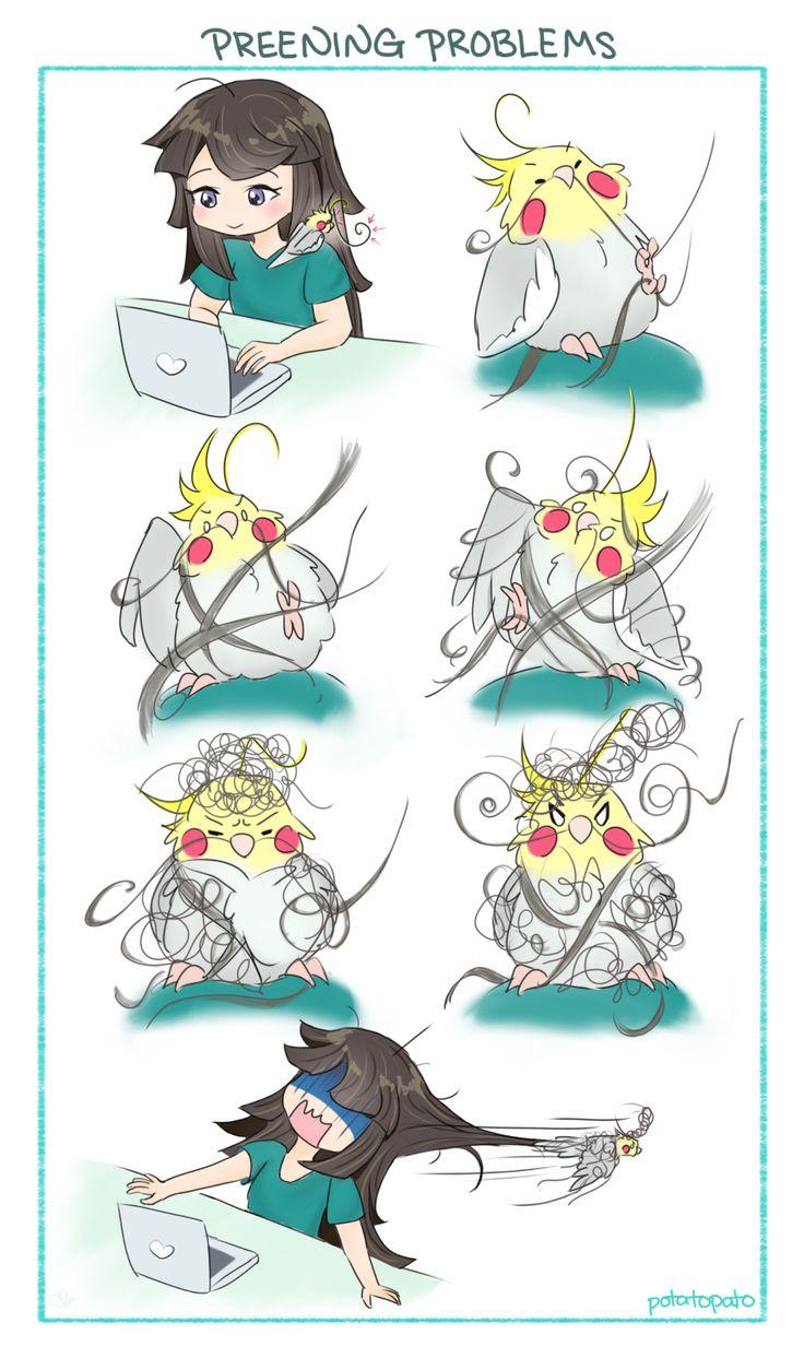 1000+ ideas about Funny Parrots on Pinterest.