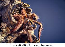 Arachnida Stock Photos and Images. 1,609 arachnida pictures and.