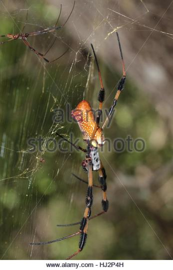 Spiders Spiders Web Stock Photos & Spiders Spiders Web Stock.