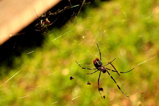Spider, Yellow.