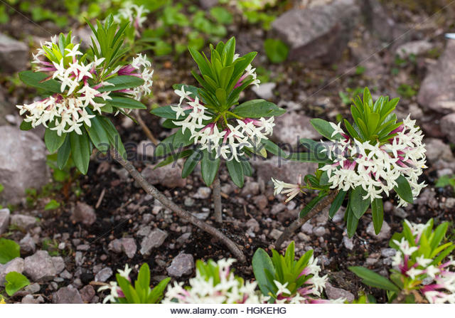 Poisonous Plant Stock Photos & Poisonous Plant Stock Images.