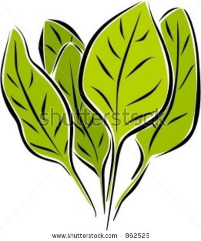Fresh Spinach Clip Art.