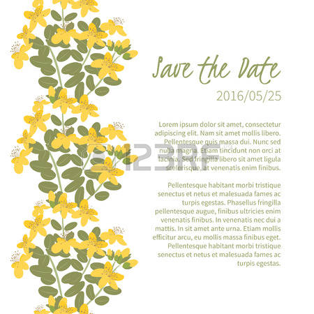 80 St John S Wort Cliparts, Stock Vector And Royalty Free St John.