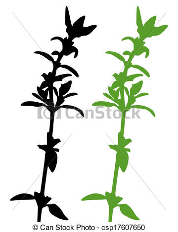 Thyme Vector Clip Art EPS Images. 519 Thyme clipart vector.