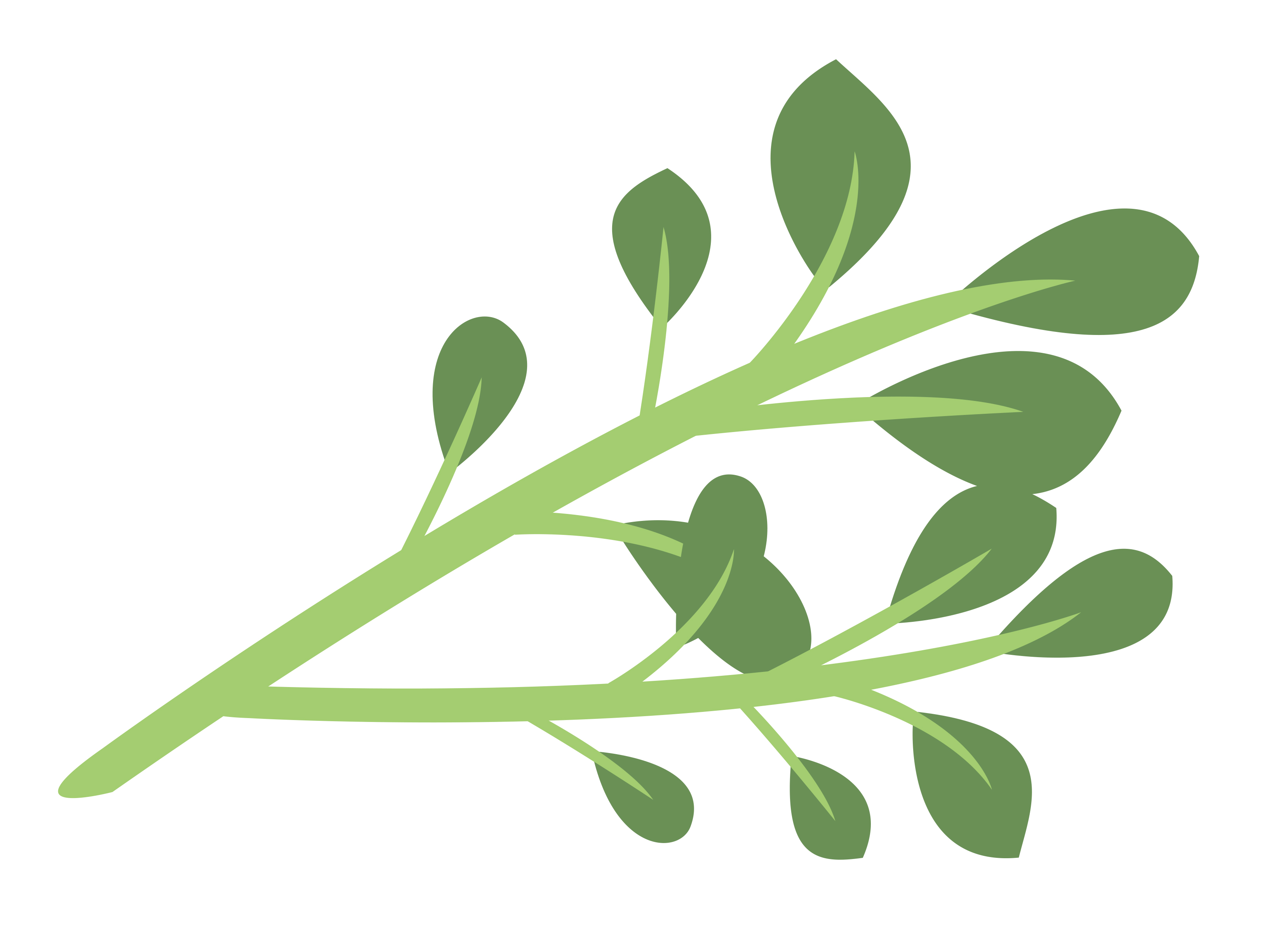 Thyme Food Clipart.