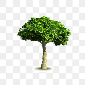 Real Trees PNG Images.