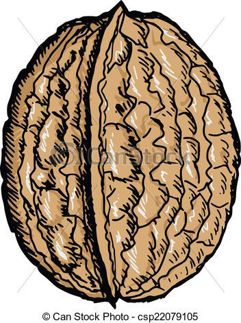 Vector Clipart of walnut.