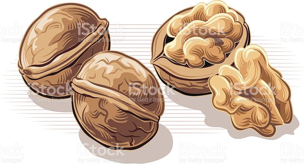 Similar to walnut clipart #11