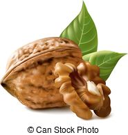 Walnuts Clipart and Stock Illustrations. 2,252 Walnuts vector EPS.