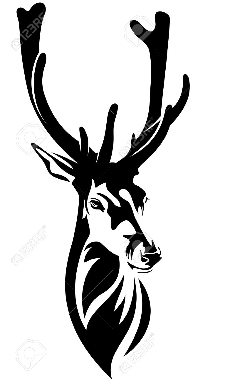 Deer Head With Big Antlers.