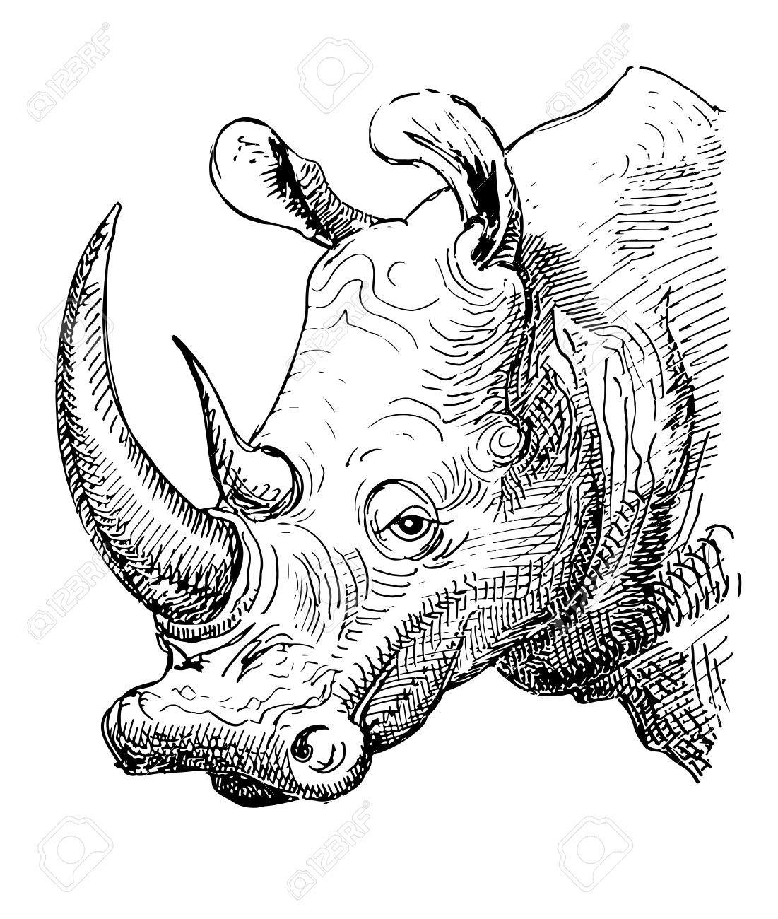 Artwork Rhinoceros, Sketch Black And White Drawing Of Realistic.