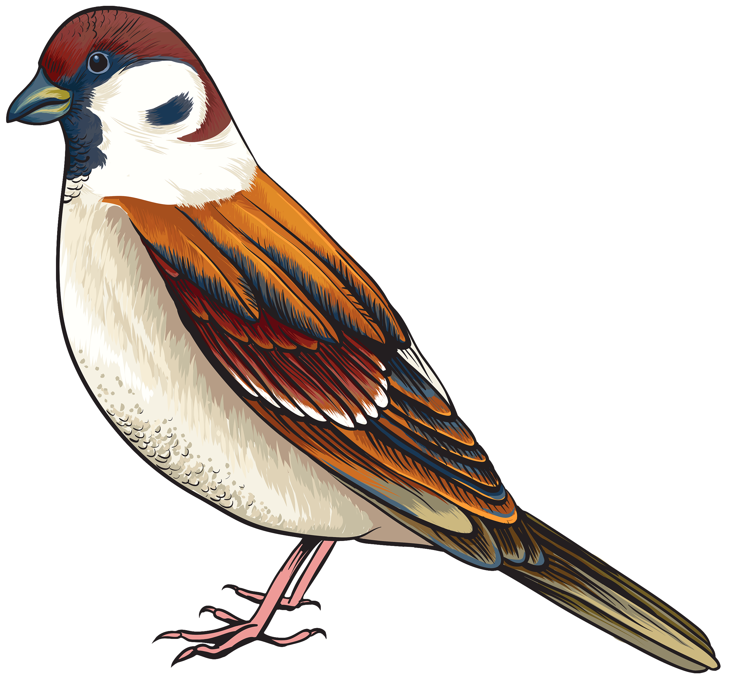 Bird Clipart Realistic.