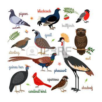 cartoon bird: Vector bird icons. Colorful realistic birds.