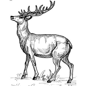 Free Realistic Reindeer Cliparts, Download Free Clip Art.