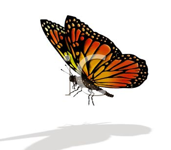 Royalty Free Clip Art Image: Realistic Orange and Black Butterfly.