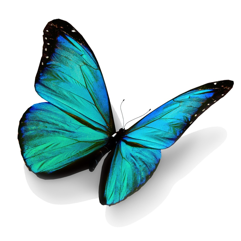 Realistic Butterfly Flying Away Clipart.
